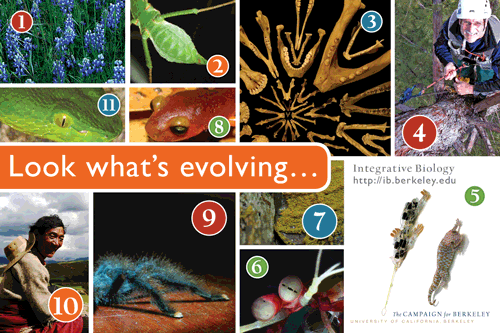 Integrative Biology postcard mailer